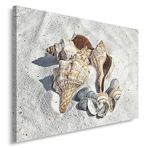 Feeby. Cuadro en lienzo - 1 Parte - 30x40 cm, Imagen impresión Pintura decoración Cuadros de una pieza, CONCHAS, PLAYA, GRIS, MARRÓN