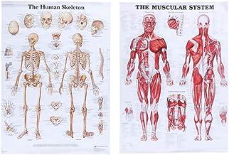 Vosarea 2pcs sistema esquelético muscular cartel anatómico conjunto imágenes de enseñanza médica 50 * 70 cm