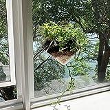 Kurraba Window Suction Plant Pot - Diamond Shape, Window Planter with Suction Cup for Succulent, Cactus, Flower, Herbs, Hanging Planter Box, Indoor Home Kitchen Decor Plant Pots, Window Plant pots.