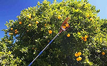 FLY HAWK Fruit Picker Oranges and Fruit Trees 13 Foot a 13-Foot-Long Fruit Picker Equipped with Optional Splicing of Lightweight Stainless Steel to Pick Apples