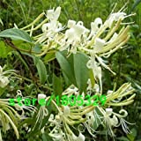 . GGG 10kinds Colores 100Pc fantástico Jinyinhua Semillas Semillas Bonsai Semillas de Alto Supervivencia madreselva para jardín: Amarillo