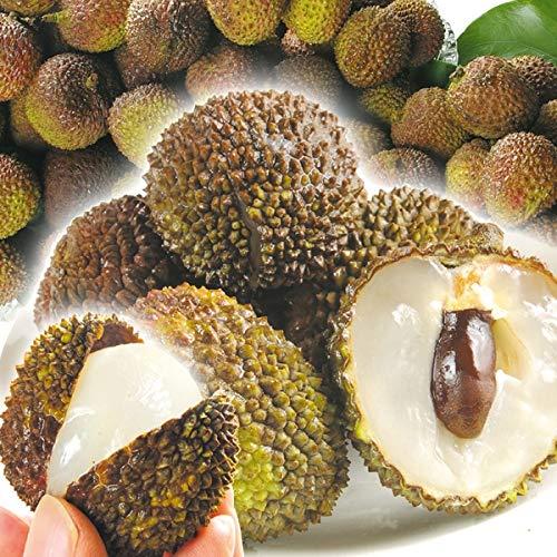 国華園 台湾産 生ライチ 玉荷包 1.5�s 1組 南国フルーツ