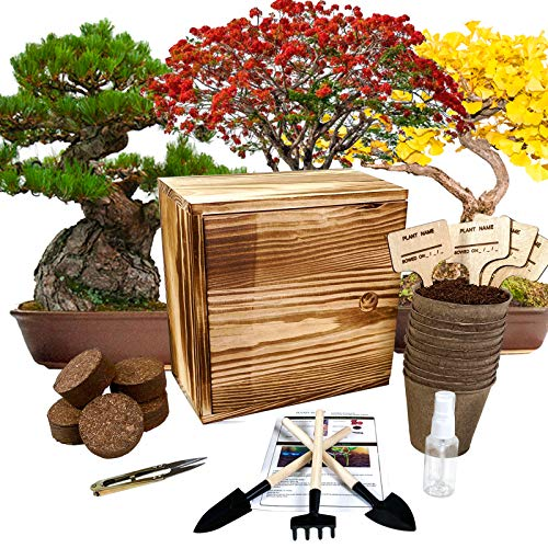 Hand-Mart 4 Bonsai Tree Seeds with Planter Box Starter Kit, Sakura Ginkgo Pine Flame Tree, Including Everything-Soil, Pots, 3 Garden-Tool, Pruner, Sprayer, Plant Labels, Wood Box-DIY Craft