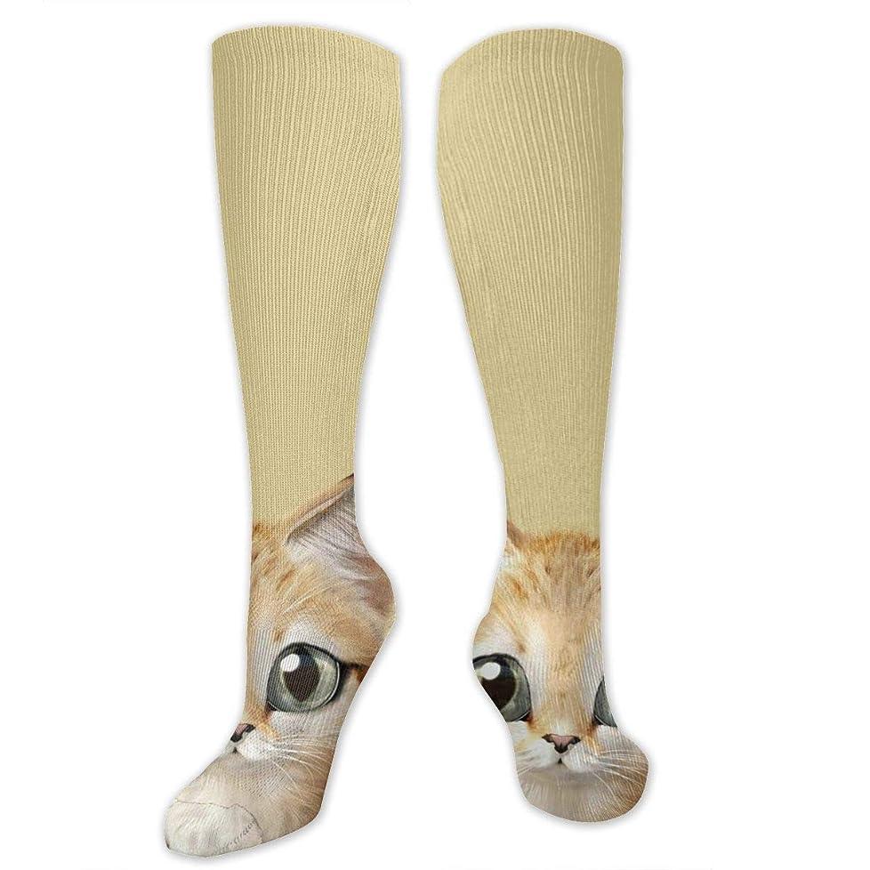 航空便鉱夫アルカトラズ島かわいいかわいい靴紐柄柄柄柄柄柄美柄美柄子猫