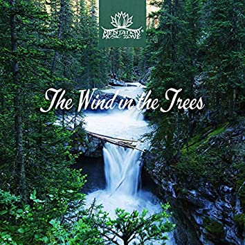 The Wind in the Trees - Nature Sounds for Sleep, Relaxation & Meditation