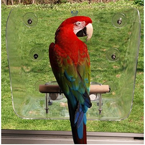 Avianweb Your Pet Bird's Favorite Window Seat (Large)