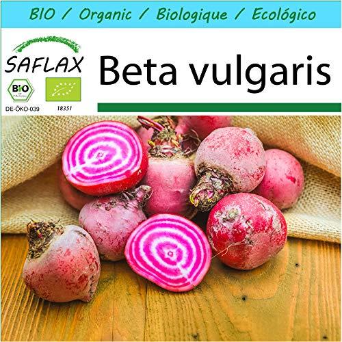 SAFLAX - Kit cadeau - BIO - Betterave - De Chioggia - 70 graines - Avec boîte cadeau/d'expédition, autocollant d'expédition, carte cadeau et substrat de culture - Beta vulgaris