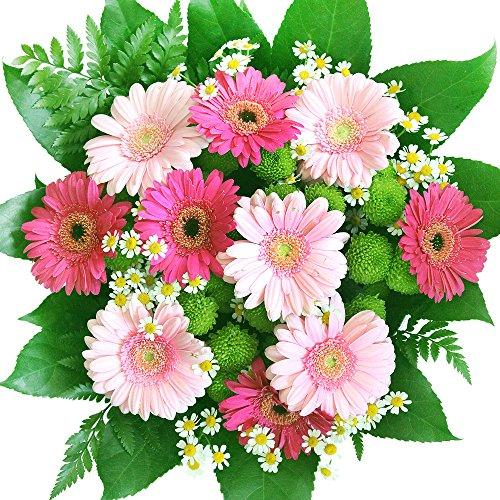 Blumenstrauß - Gerbera - Pink-rosa