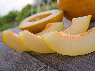 Seeds Melon Honeydew Titovka Yellow Sweet Organic Heirloom Russian Ukraine