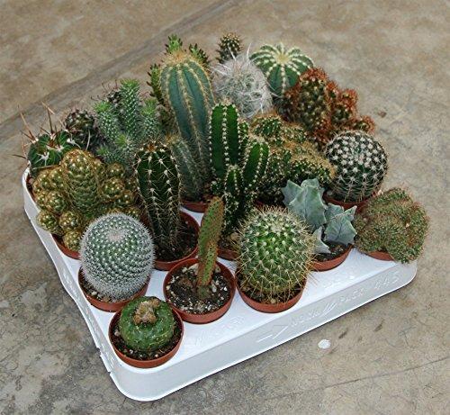 grasa y plantas suculentas plantas en maceta 20 de diámetro diferente 5