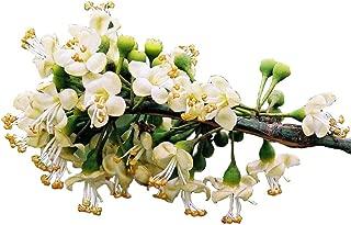 Kapok (Silk Cotton Tree), Ceiba Pentandra, Tree 20 Seeds