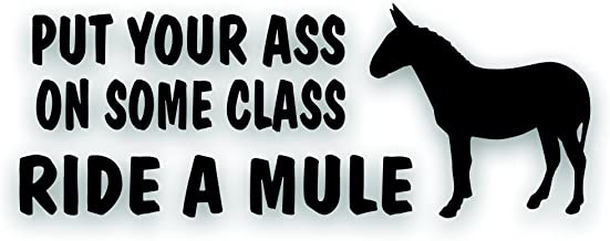 Solar Graphics USA Put Your Ass On Some Class Ride A Mule Horse Decal for Your Tack Box, Truck Or Horse Trailer - 4 x 10 3/4 Inch Black
