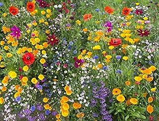 Ultrey Samenshop - Selten Wildblumen Samen Blumenmischung Schmetterling & Biene freundlich Mix Wiese Samen Mehrjährige Pflanzensamen winterhart Typ 3