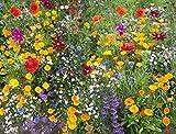ADOLENB Seed House - 50pcs Semillas de flores silvestres raras Mezcla de flores Mezcla de mariposas y abejas Mezclas de pradera Semillas perennes Hardy
