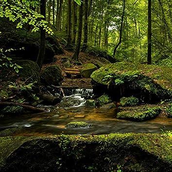 Beauty In Nature | Woodlands Heavy Rain