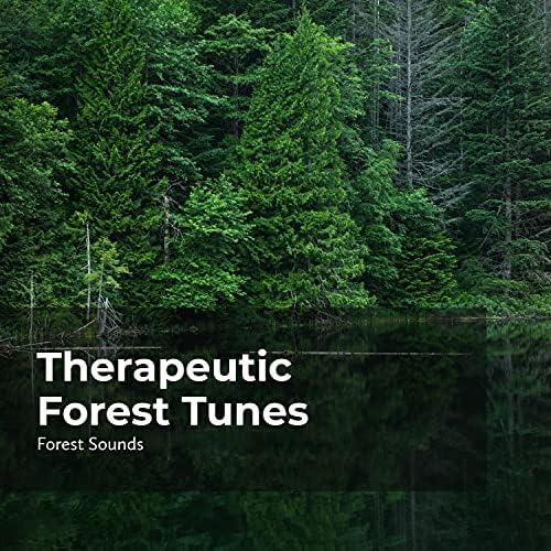 Ambient Forest, Rainforest Sounds & Forest Sounds