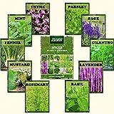 ZLKING 1100 albahaca, lavanda, tomillo rastrero semillas mezcla de especias Combo verdadera semilla de flor del jardín Para el hogar bricolaje Bonsai La siembra de la herencia