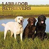 Labrador Retrievers 2020 - 16-Monatskalender mit freier DogDays-App: Original BrownTrout-Kalender [Mehrsprachig] [Kalender] (Wall-Kalender)