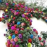 100pcs Mix Color Climbing Rose Seeds Flower Garden Climbing Plant