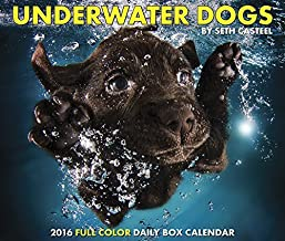 Underwater Dogs 2016 Daily Box Calendar by Inc. Willow Creek Press (June 01,2015)