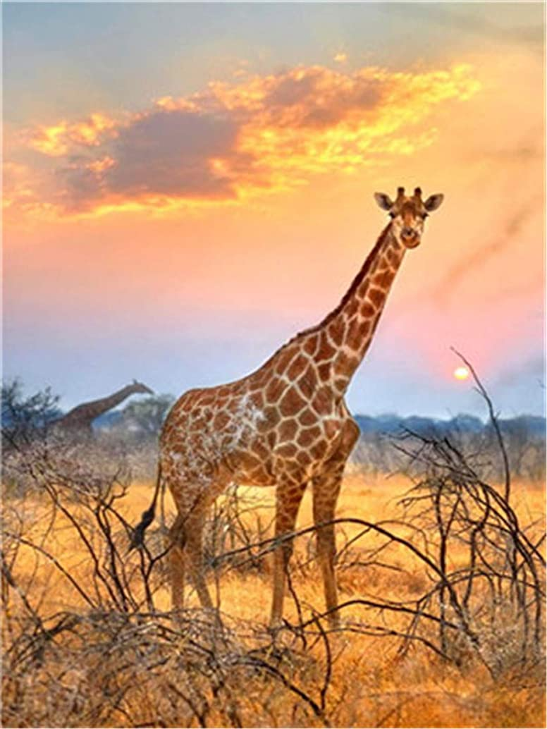 DIY Oil Painting Paint by Number Kit for Kids Adults Beginner 16x20 inch - Giraffes on The Prairie, Drawing with Brushes Christmas Decor Decorations Gifts (Without Frame)