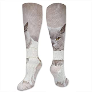 Not Applicable Media Gatos British Shorthair Gray Scarf Travel Sports Calcetines De Compresión Ciclismo Popular Senderismo Unisex Muslo Medias Cosplay Gym 50Cm Long Tube Calcetines Yoga Running