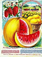 サルツァー果物野菜の種、ブリキのサインヴィンテージ面白い生き物鉄の絵画金属板ノベルティ