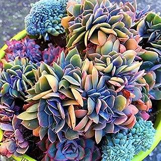 Best japanese succulents for sale Reviews
