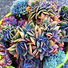 Best stapelia seeds for sale Reviews