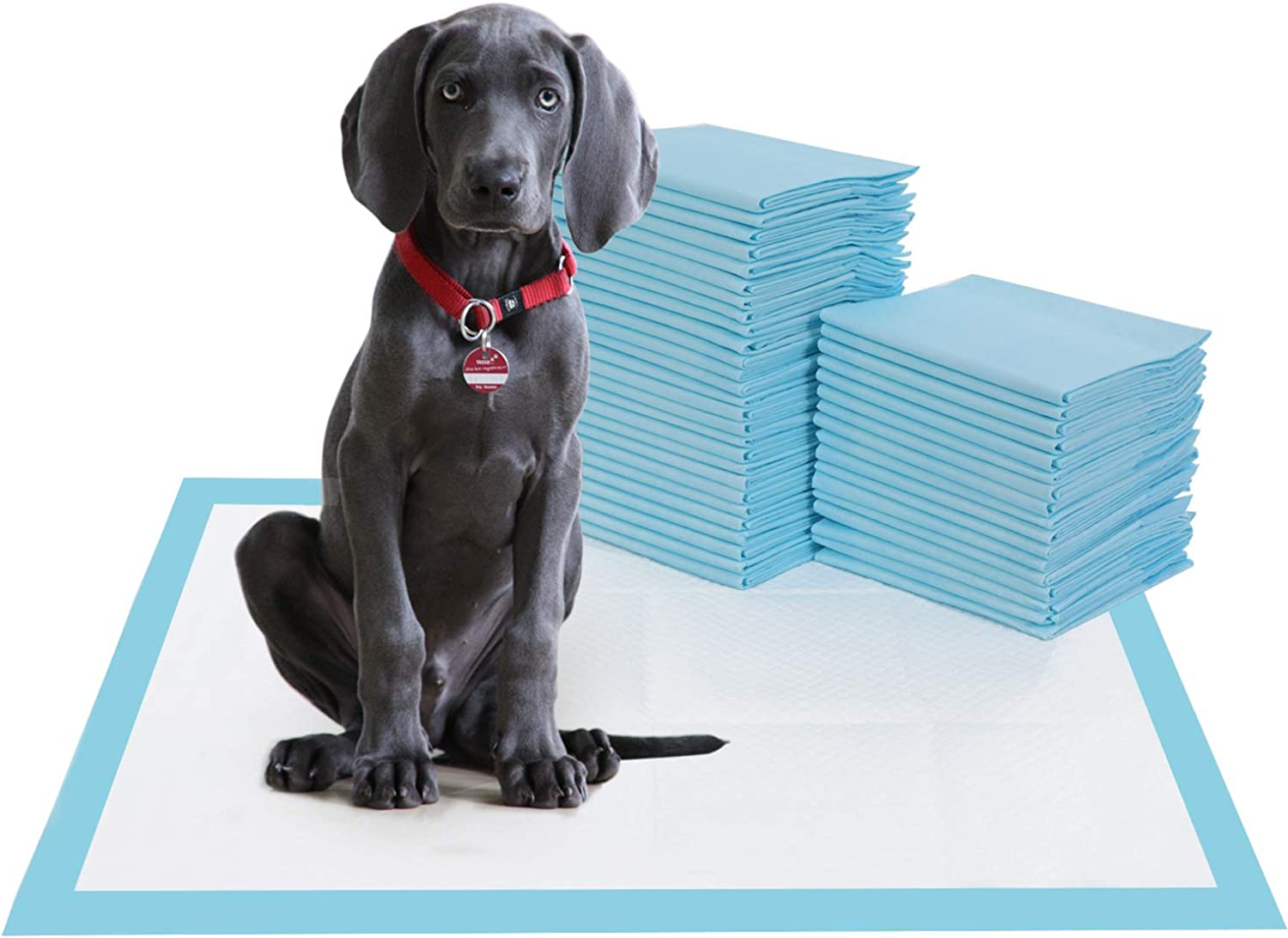 BESTLE Large Pet Training and Puppy Pads Pee Pad for Dogs 24 x24 80 Count Super Absorbent & LeakFree