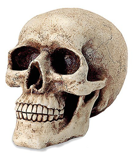 DiiliHiiri Hucha en Forma de Calavera, tamaño Real, decoración Halloween.