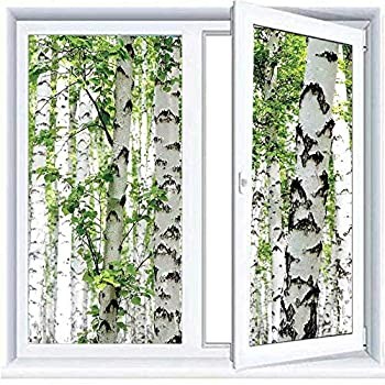 SLLART Decorative Glass Sticker Privacy Window Films Woodland Decor,Birch Trees in The Forest Summertime Wildlife Nature Themed Decorating Picture,White Green 17.7 x78.7  Rainbow Privacy Window Film