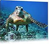 Schildkröte über Korallenriff Format: 120x80 auf