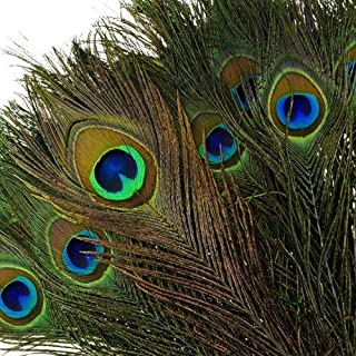 peacock wing feathers for sale