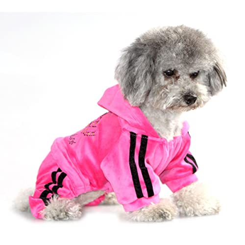 Image result for poodles in summer clothes
