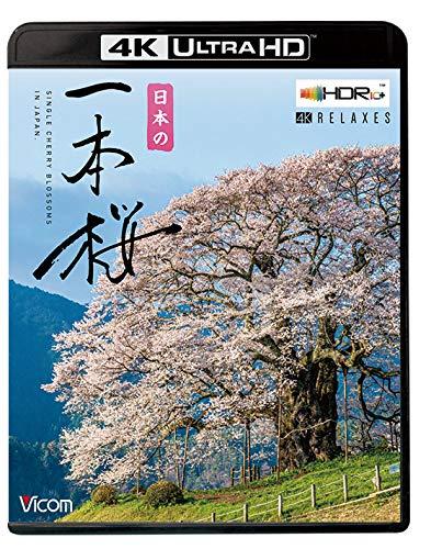 日本の一本桜 【4K・HDR】【4K Ultra HDブルーレイ】 [Ultra HD Blu-ray]
