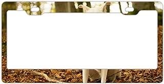 Custom License Plate Frame Cute License Plate Frame Customized AluminumL Metal License Plate Frame