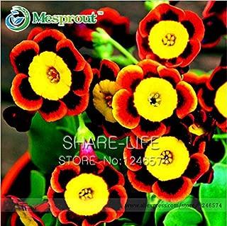 Scarce Rare Phantom Tricolor Petunia Flower Seeds 200 Seeds/pack Garden Bonsai Petunia