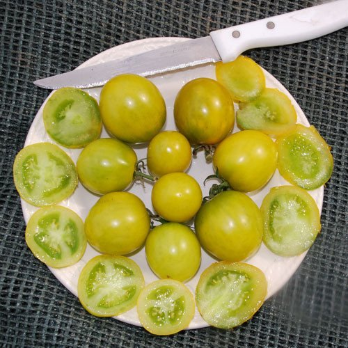 Plant World Seeds - Green Grape Seeds