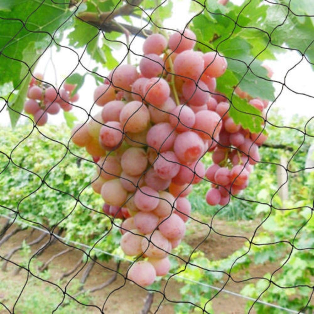 DiLiBee Red antipájaros Nailon, para Proteger Las Frutas, Verduras, árboles, viñedos, Jardines, etc.: Amazon.es: Jardín