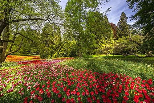 LFNSTXT Rompecabezas para adultos, 1000 piezas, de Alemania, parques, tulipanes, isla de Mainau, para adultos, familias y niños. Juguete educativo para decoración del hogar (75 x 50 cm)