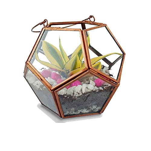 Terrarium Plants Buy Terrarium Plants Online At Best Prices In