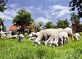 Kerbl Ovi Net - Malla Flexible para ovejas (90 cm x 50 m)