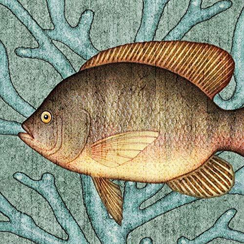 Tilapia Fish Coastal Square Art Print by Dan Morris