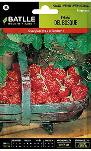 Semillas Hortícolas - Fresas del Bosque ...