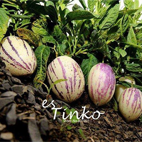 15pcs Pepino Graines Pepino Melon Pear Fruit & Semences potagères jardin Bonsai usine Diy Livraison gratuite