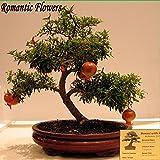 Giapponesi Bonsai Nano melograno semi, fioritura Albero da frutto, Arredamento Ufficio, 10 particelle / bag