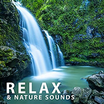 Relax & Nature Sounds – Concentrate Music Therapy, Calm Sounds, Nature Mood