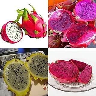 200 Seeds 4kinds Mix Pitaya Dragon Fruit Yellow Seed Fragrant Cactus Rare Exotic
