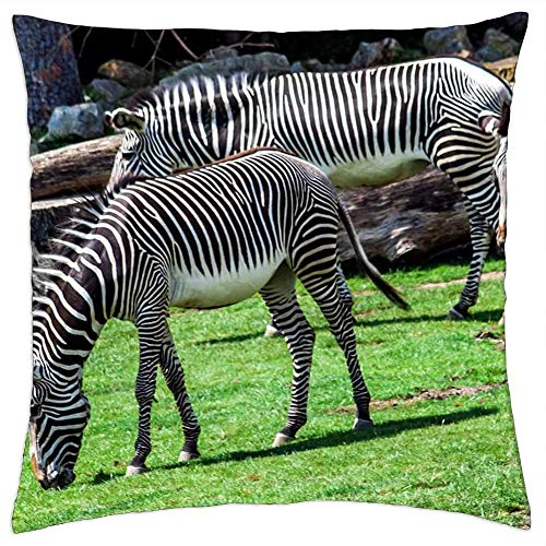 ETGeed Zoo Zebra Striped Black White Horse Animal Wild Throw Pillow Covers,Decorative Cushion For Sofa Couch Bed Home Decoration,18 x 18 Inch